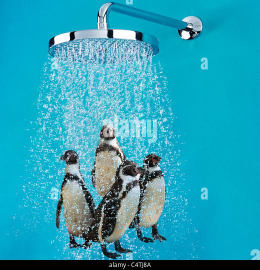 Shower Doors By Tj