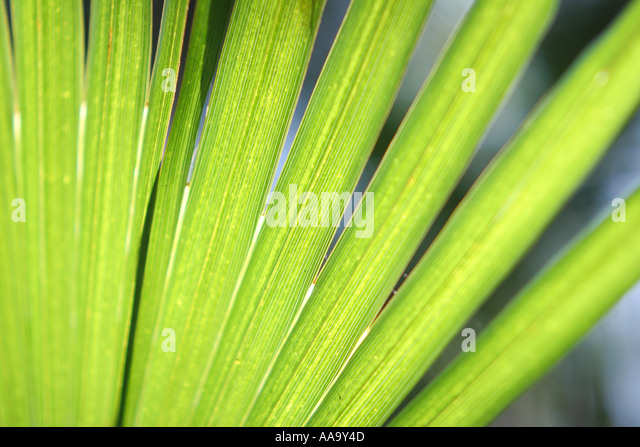 florida tropical plant flora growing life palm branch frond