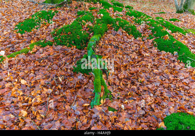 moss covered forest floor stock photos & moss covered forest floor