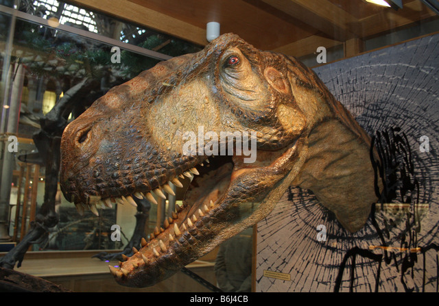 Walking With Dinosaurs Eustreptospondylus