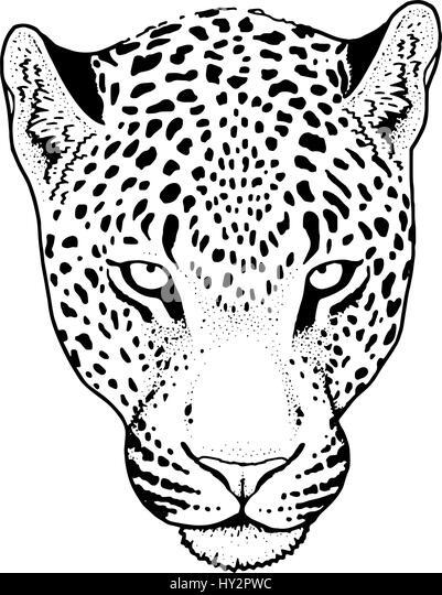 Download Animals Cheetahs Wallpaper 1680x1120 | Wallpoper ... |Iranian Cheetah Vector