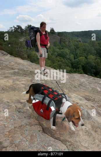 Dog With Backpack Stock Photos & Dog With Backpack Stock Images ...
