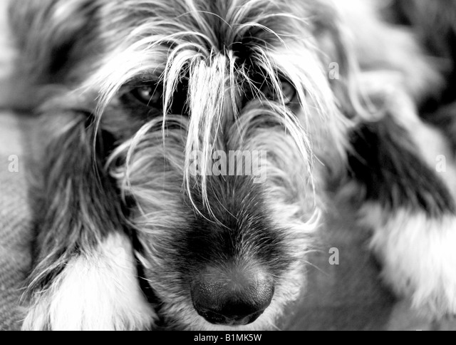 Best Sad Black Adorable Dog - sad-adorable-dog-b1mk5w  Gallery_711567  .jpg