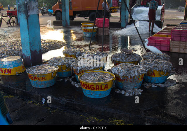 Indian fish market stock photos indian fish market stock for Oriental fish market