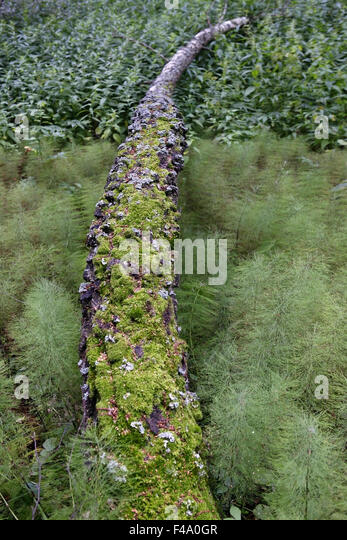 Moss covered tree stock photos moss covered tree stock for What is a tree trunk covered with 4 letters
