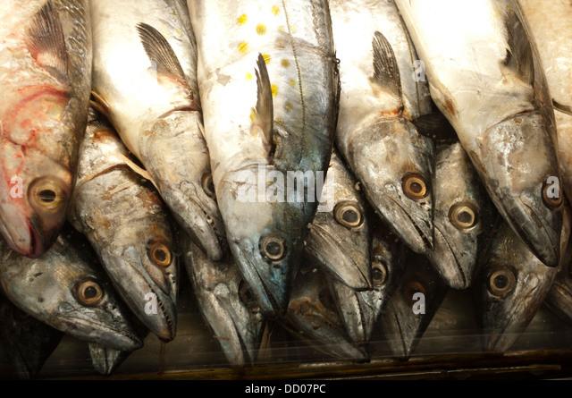 Caicara stock photos caicara stock images alamy for Parana the fish
