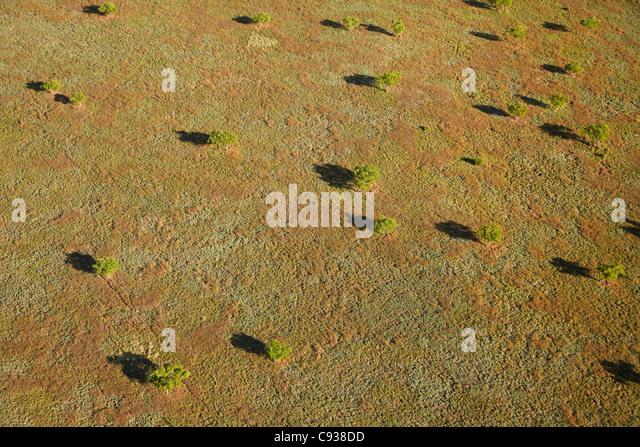 Western Grass Plains