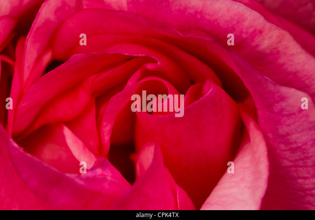 Ravishing Trailing Stems Stock Photos  Trailing Stems Stock Images  Alamy With Entrancing Pink Rose  Stock Image With Charming The Royal Botanic Gardens Melbourne Also Marina By The Bay Garden In Addition Garden Route Game Lodge And Garden Room Roof As Well As Black Metal Garden Bench Additionally Gardens New Forest From Alamycom With   Entrancing Trailing Stems Stock Photos  Trailing Stems Stock Images  Alamy With Charming Pink Rose  Stock Image And Ravishing The Royal Botanic Gardens Melbourne Also Marina By The Bay Garden In Addition Garden Route Game Lodge From Alamycom