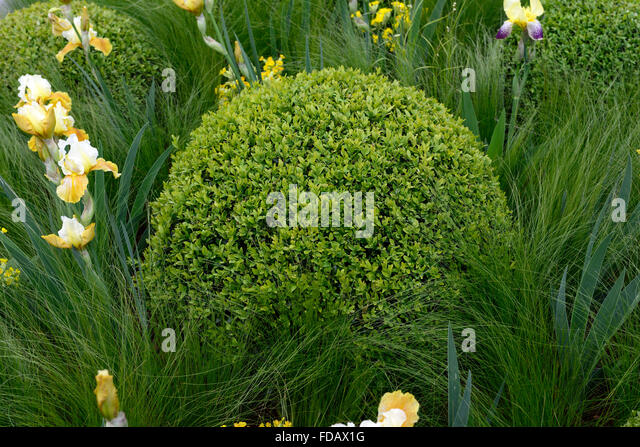 Pittosporum stock photos pittosporum stock images alamy for Grasses planting scheme
