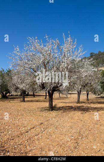 Cherry <b>Blossom</b> / Rape <b>Field</b> / Japan   HD Stock Video 734-677-771 ...