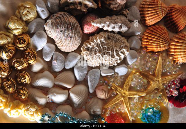 stil of assorted seashells stock photos stil of