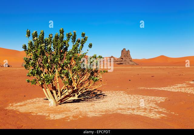 Algeria dating site