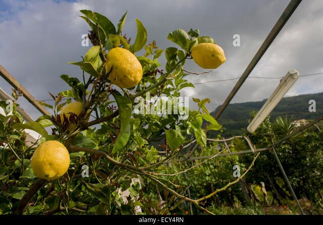 fertile soil volcano - photo #44