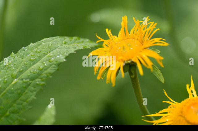 a aster flower stock photos  a aster flower stock images  alamy, Beautiful flower