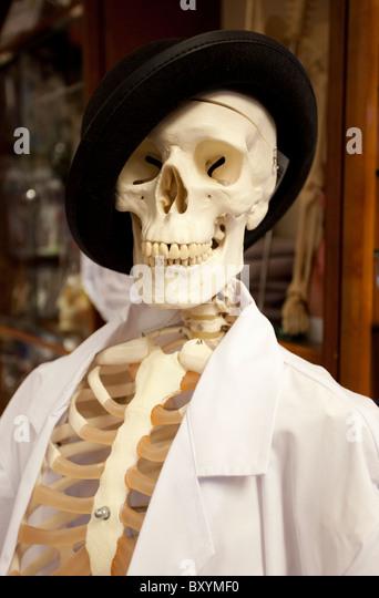 skeleton lab stockfotos und skeleton lab stockbilder - alamy, Skeleton