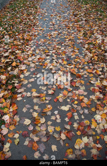Image result for wet leaves on sidewalk