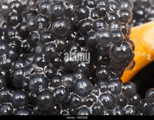 Hippoglossus hippoglossus stock photos hippoglossus for Black caviar fish