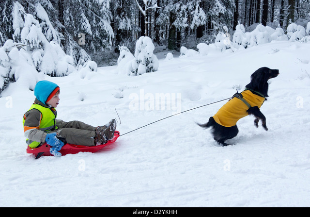 Being Pulled By A Dog Stock Photos & Being Pulled By A Dog ...