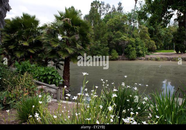 Los Angeles Arboretum Stock Photos Los Angeles Arboretum