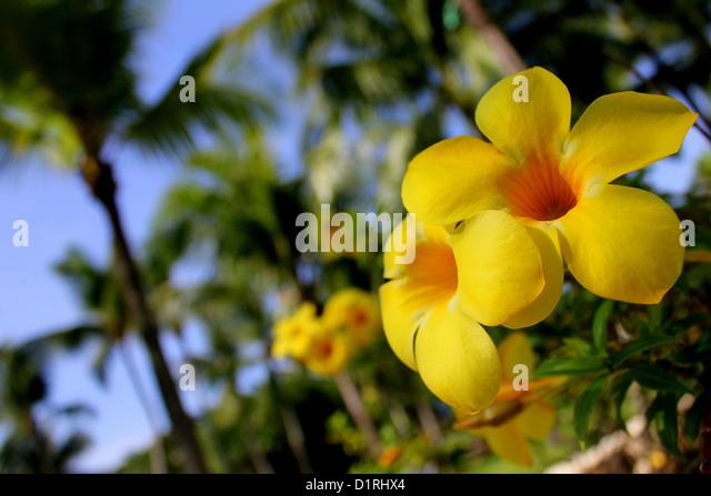 Palm tree with yellow flowers choice image flower decoration ideas palm tree in yellow sky stock photos palm tree in yellow sky stock tropical yellow flowers mightylinksfo Gallery