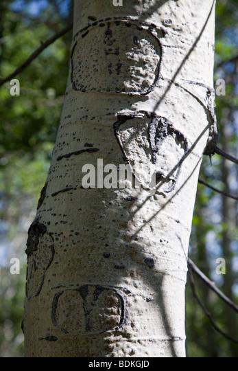 Tree carving stock photos images alamy