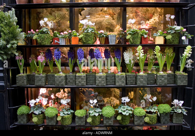 Florist shop window display near Boulevard Saint Germain Paris France ...