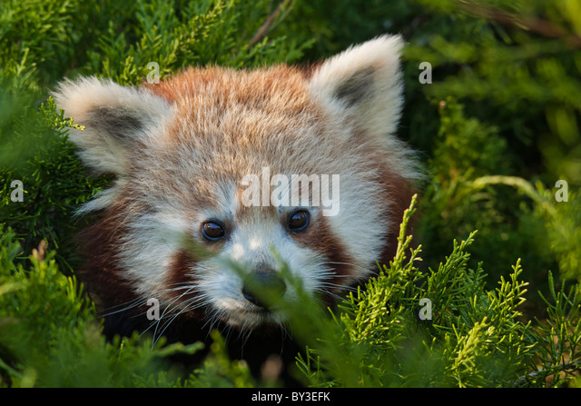 fulgens or shining - photo #13