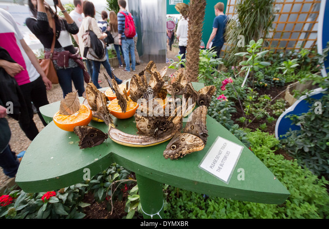 D Exhibition In London : Butterfly exhibition stock photos