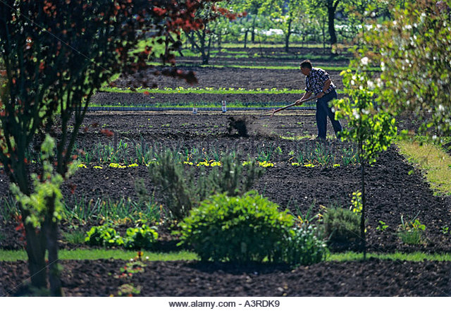Organique stock photos organique stock images alamy for Jardin ouvrier