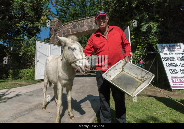 White donkey stock photos white donkey stock images alamy for Burro blanco