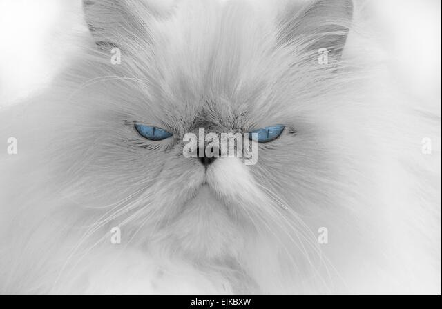 Fluffy Coat Stock Photos & Fluffy Coat Stock Images - Alamy