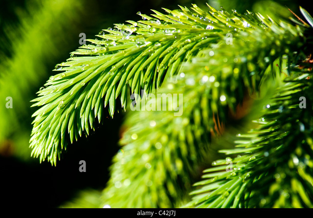 Christmas Tree Fern Rainforest Islands Ferry