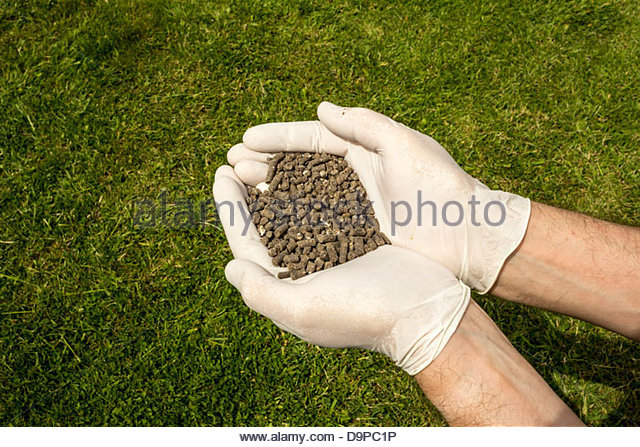 person with a handful of organic chicken manure pellets stock image - Chicken Manure