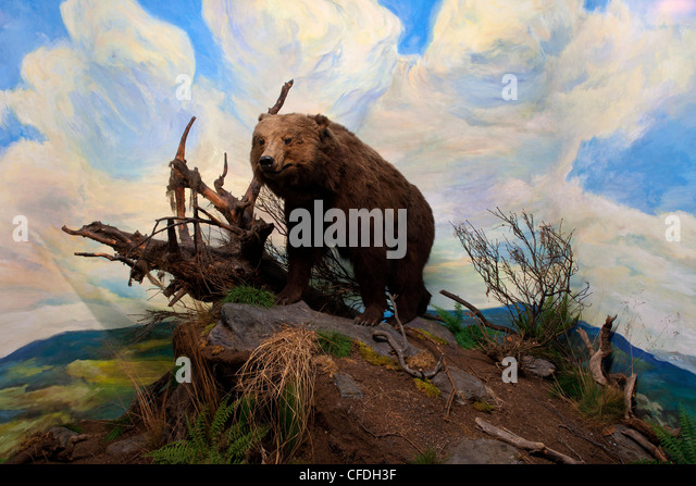 Diorama Stock Photos Diorama Stock Images Alamy