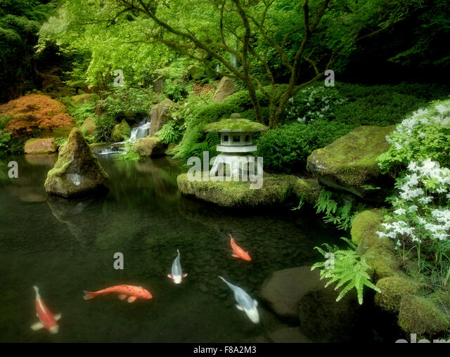 Pond garden fish stock photos pond garden fish stock for Japanese koi pond garden