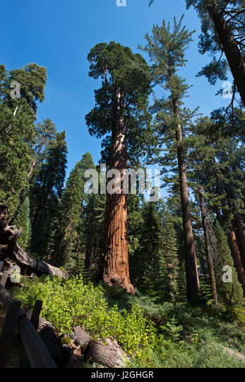 sequoia national park latin singles Plan your visit to sequoia & kings canyon national parks with everything from  fine hotels and restaurants to classic tent cabins spend your time among the.