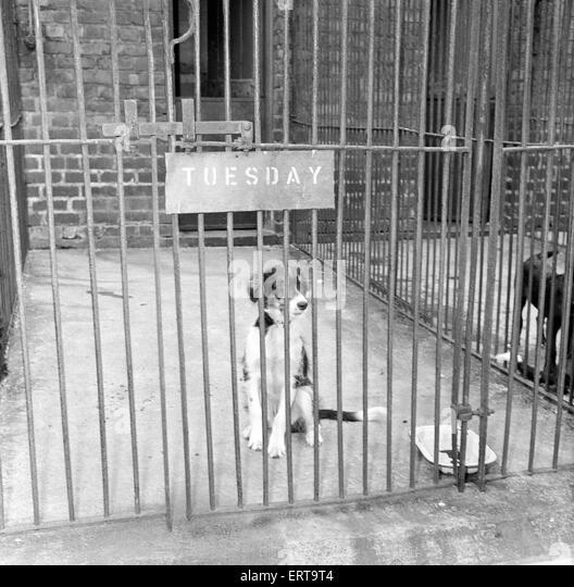 Dog Boarding Kennels Manchester Uk