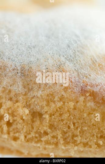 Moldy Cake