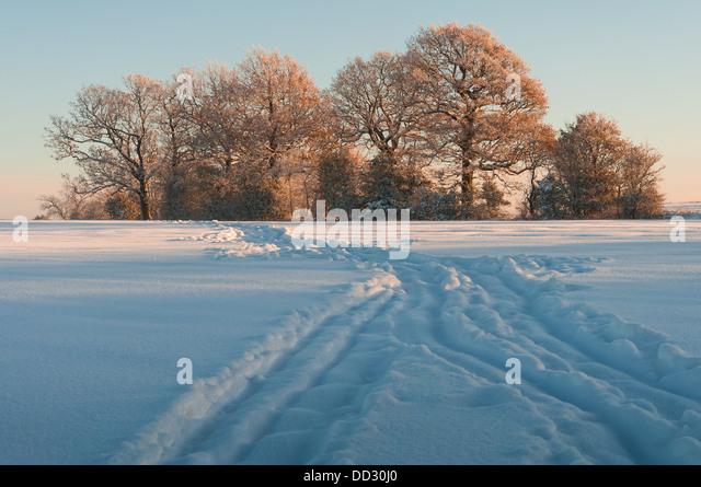 Image Result For Beech Hurst Gardens Car Park
