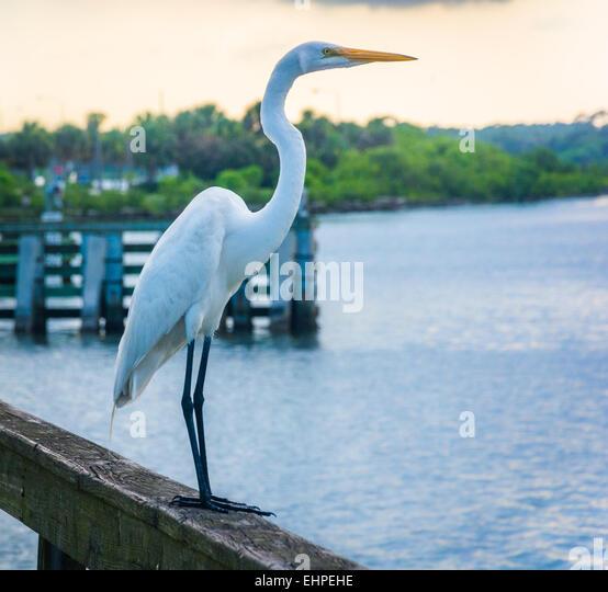 Miami florida stock photos miami florida stock images for Miami fishing piers
