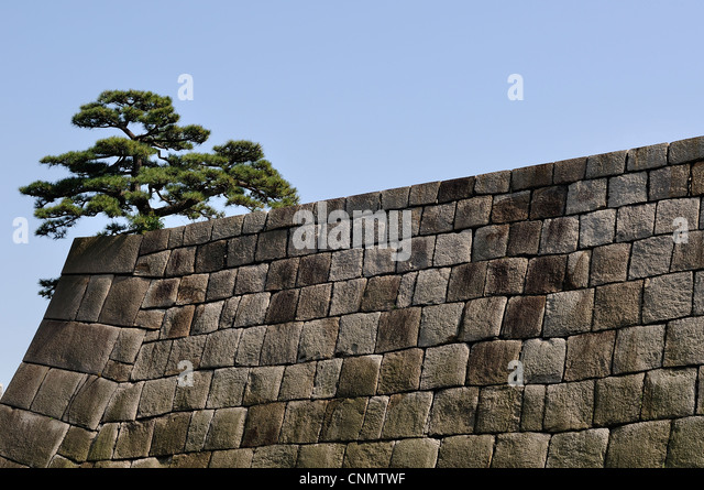 Side View Of Large Cobblestone Wall And Tree On Top At Imperial Palace  (Tokyo,