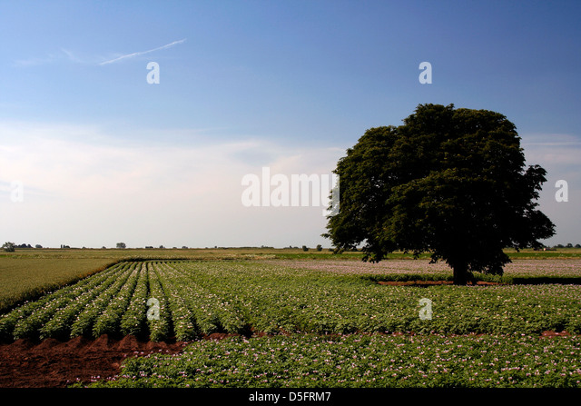 Cultivating Britain Stock Photos Amp Cultivating Britain