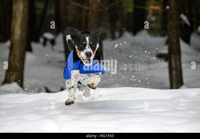dogs chasing through the - photo #31