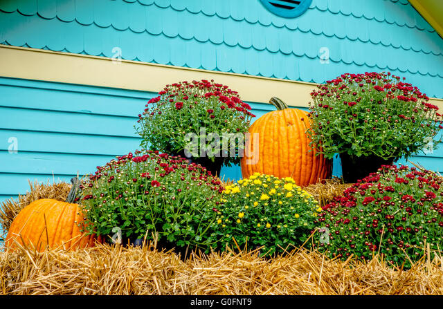 pumpkin and harvest decorations for the holidays stock image - Harvest Decorations