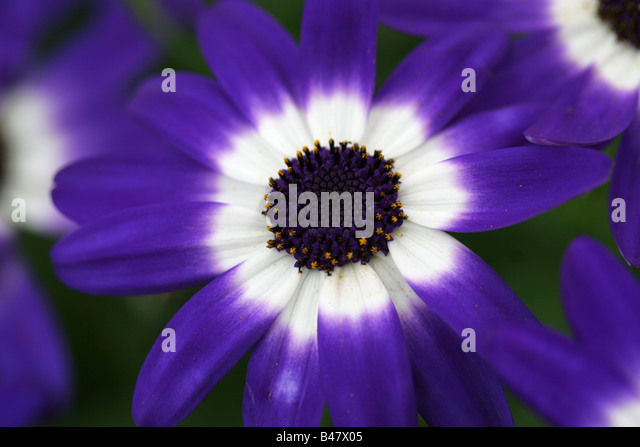 entomophilous flower stock photos  entomophilous flower stock, Natural flower