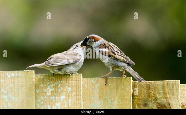 Garden Birds In Britain Stock Photos Amp Garden Birds In