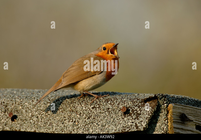Garden Sheds Kent robin shed stock photos & robin shed stock images - alamy