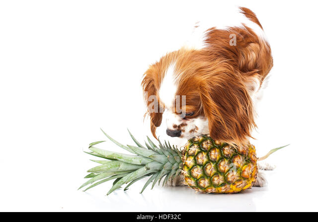 Can Dogs Eat Pineapple Slices