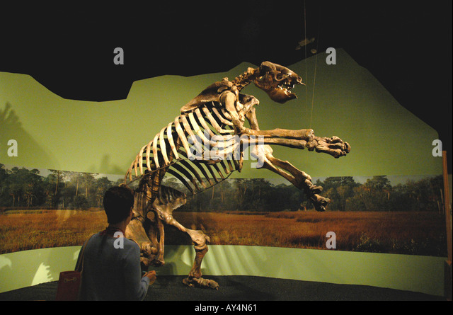 giant ground sloth fossil stock image