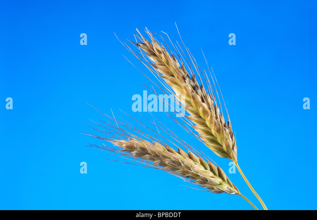 how to cut wheat out of diet